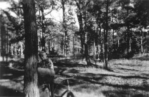 Sankning af granpærer 1957